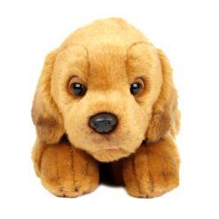 Send friendly dog to Ukraine