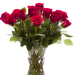 Bouquet of red roses on white backround.